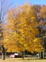 maple_sugar_form_color